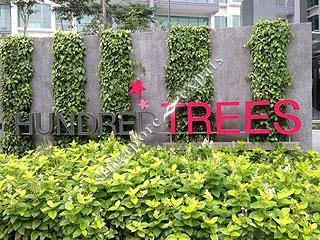 HUNDRED TREES
