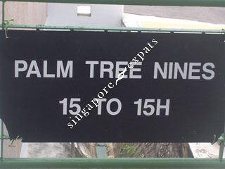 PALM TREE NINES