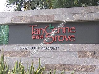 TANGERINE GROVE